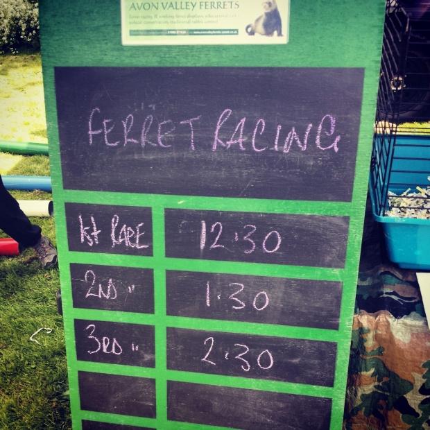 ferret-racing-times