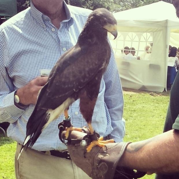 Hawk on mans Arm