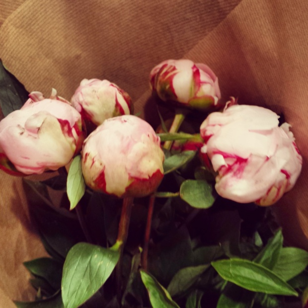 peonies-bought-from-colombia-flower-market