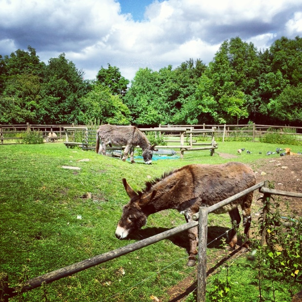 donkeys-in-a-field