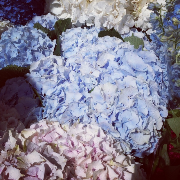 hydrangeas-at-columbia-flower-market