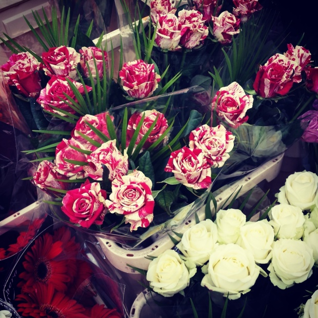 pink-and-white-roses-colombia-flower-market