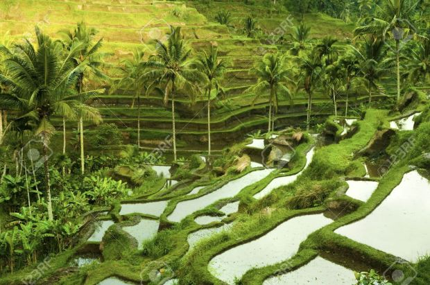 6756568-Terrace-rice-fields-in-morning-sunrise-Ubud-Bali-Indonesia-Stock-Photo.jpg