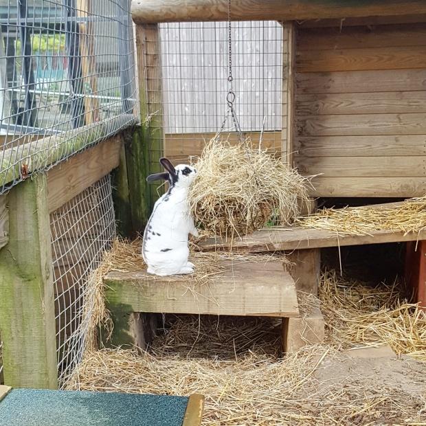 Bunny rabbit Horniman museum