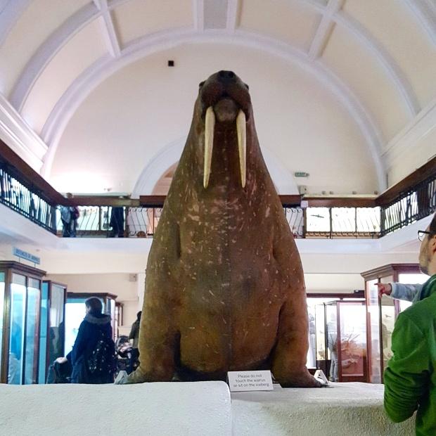Walrus Horniman museum