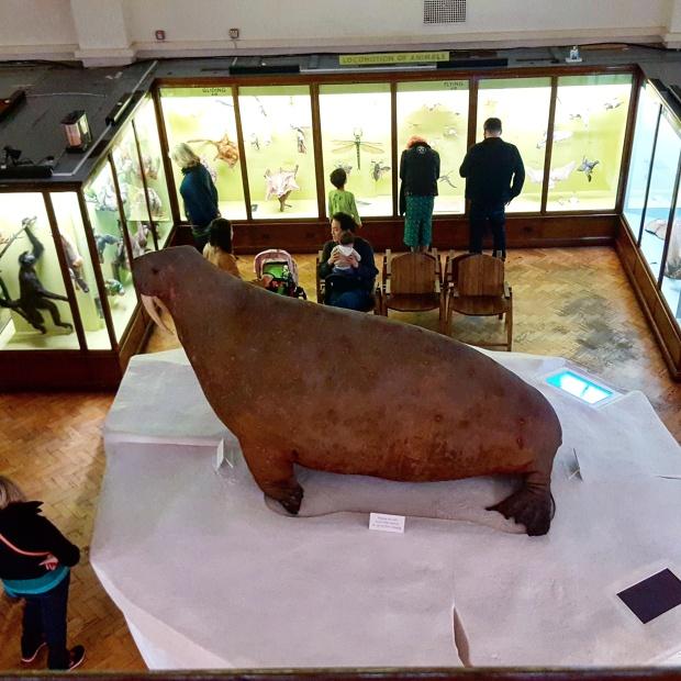 Inside the Horniman museum
