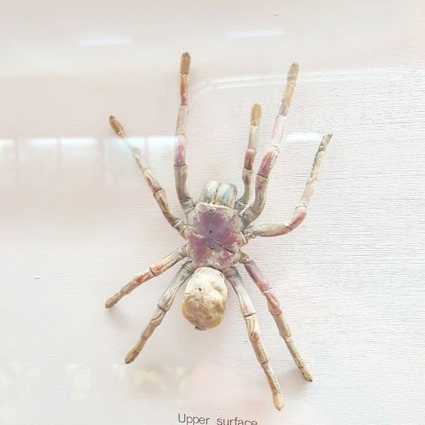 Spider on display at the Horniman museum
